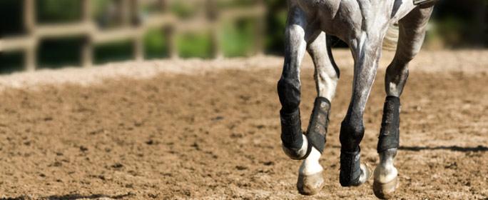Spat beim Pferd natürlich behandeln