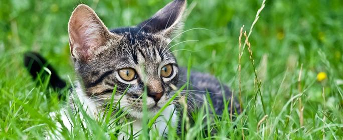 Dürfen Katzen Kräuter bekommen?