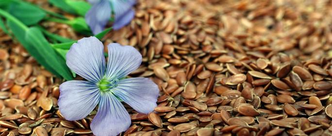 Leinsamen: Das Problem mit der Blausäure