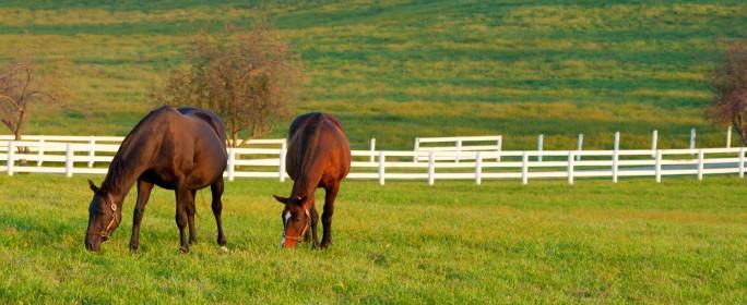 Artgerechte Pferdefütterung